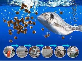fish feed production